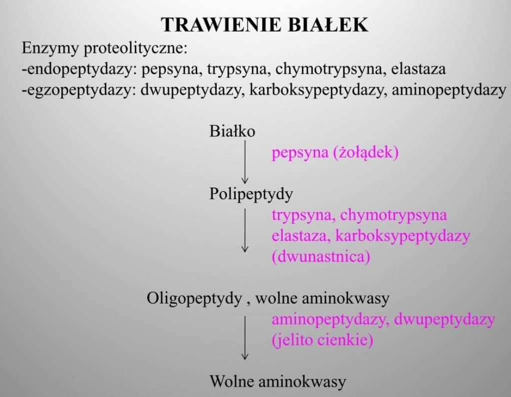 trawienie białek
