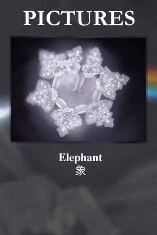 Słoń i woda strukturalna